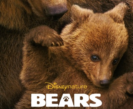 bears_featured
